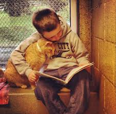 Cat with Boy Reading Book