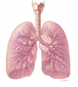 Image of Healthy Lungs